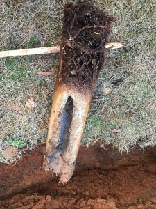 sewer line growth